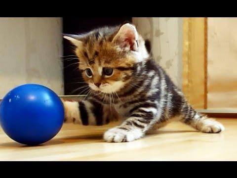 il gattino più bello del web!