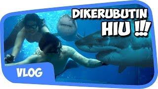 Video DIKERUBUTIN HIU with INDOVIDGRAM !!! [Vlog] MP3, 3GP, MP4, WEBM, AVI, FLV Juli 2018