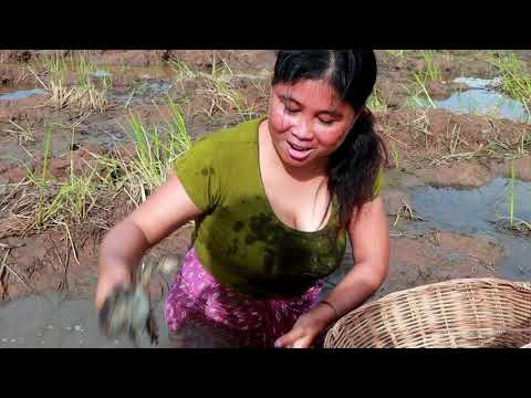 Survival Skills | Smart woman Catches Frogs for eating | yummy eating Frog 08