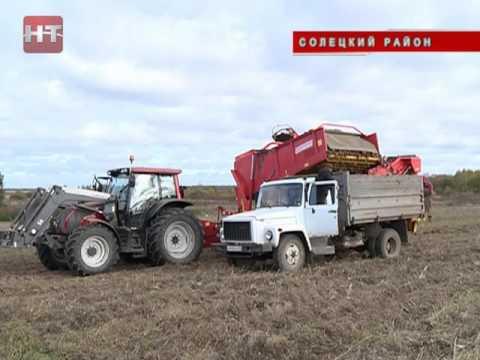 В Новгородской области продолжается уборка овощей и картофеля