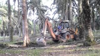 Video Panen Durian ala TKI Malaysia MP3, 3GP, MP4, WEBM, AVI, FLV Desember 2018