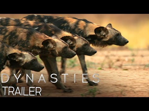 Dynasties:  Official Trailer #2   New David Attenborough Series   BBC Earth