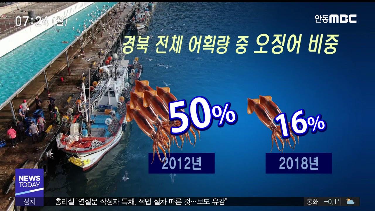 R]안 잡히는 오징어‥어민 생계 근본대책 필요