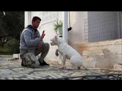 il dogo argentino e il suo istruttore