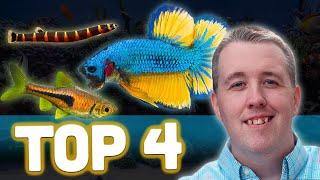 Top 5 Betta Tank Mates by Aquarium Co-Op