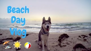 Gohan takes a trip to the beach! The beach is one of his favorite places to go. Look at all of the running and swimming he did!