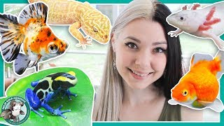 All My Pets in One Video! by Solid Gold Aquatics