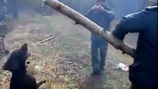 Faithful Dog Play Fetch, No Matter How Big The Stick!