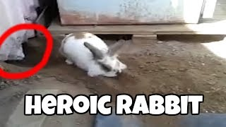 Rabbit Saves Cat Trapped in the Shed