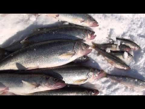 где сегодня ловить рыбу во владивостоке