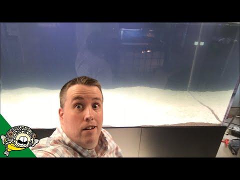 800 Gallon Aquarium live stream_Akvárium. Heti legjobbak