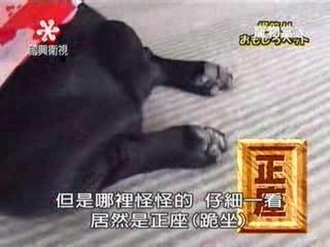 第一個拿到電影奧斯卡獎的小狗!太會演了…