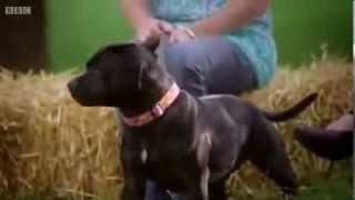 Jak psy reagują na płacz obcej osoby? Łamanie stereotypów o rasach.