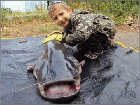 Wielka ryba złowiona przez dziecko