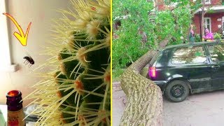Video Things That Happen Once In A Lifetime 「 funny photos 」 MP3, 3GP, MP4, WEBM, AVI, FLV September 2018