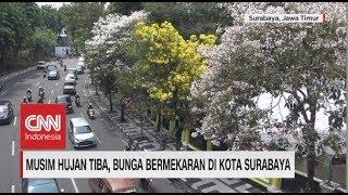Video Musim Hujan Tiba, Bunga Bermekaran di Kota Surabaya MP3, 3GP, MP4, WEBM, AVI, FLV Desember 2018