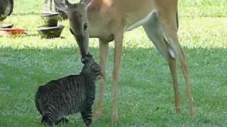 Олень и кошка
