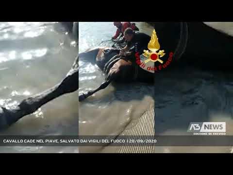 CAVALLO CADE NEL PIAVE, SALVATO DAI VIGILI DEL FUOCO  | 20/09/2020