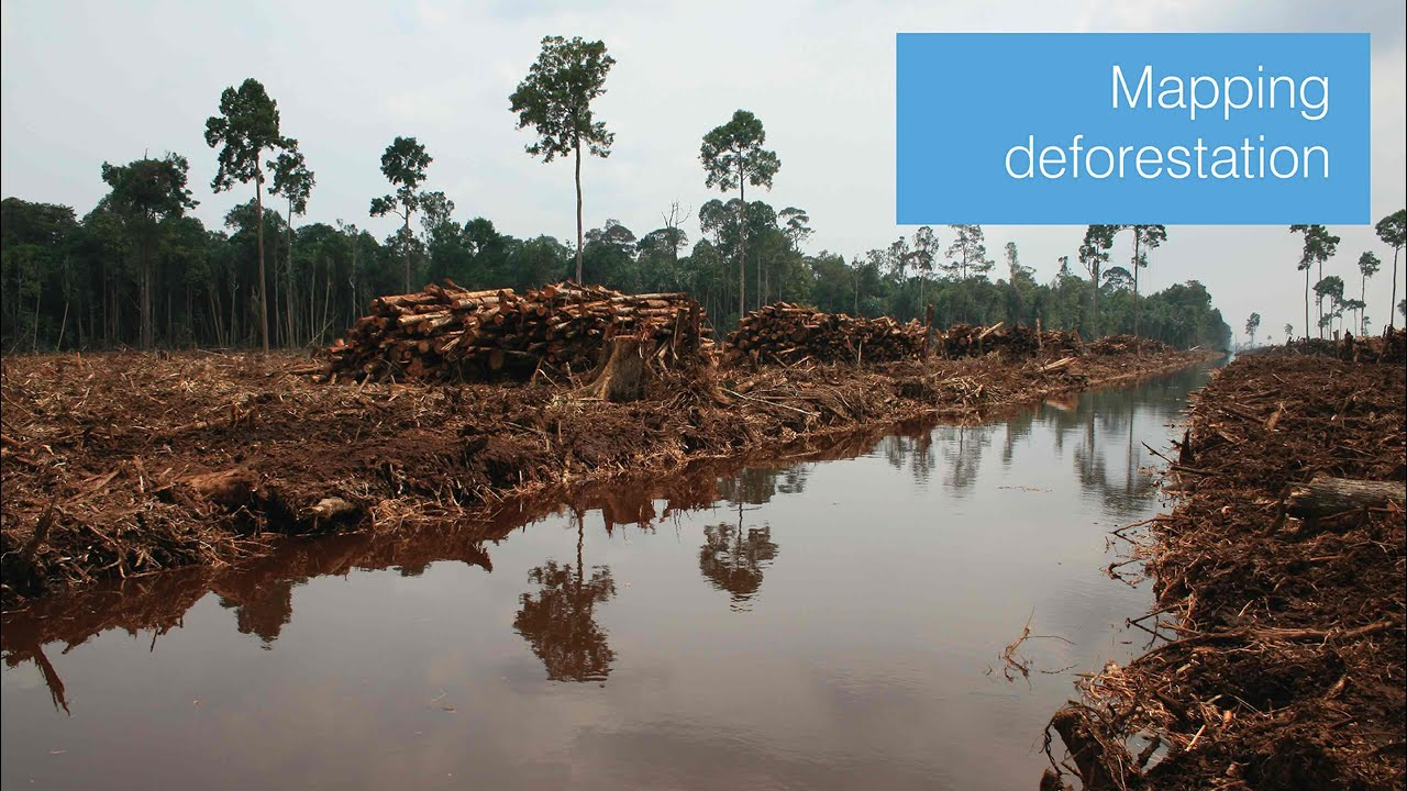Mapping deforestation