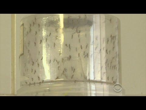 Florida declares Zika virus health emergency