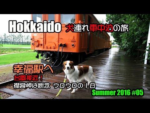 北海道犬 動画   犬犬動画の一覧...