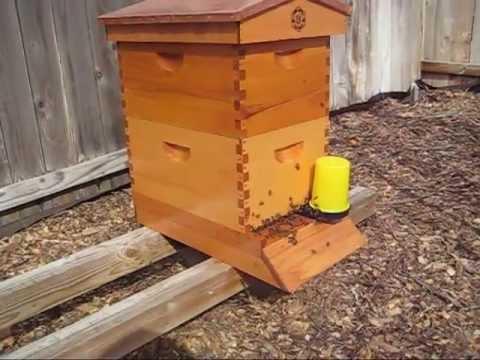 Beekeeping: Staining & Weatherproofing English Garden Beehives
