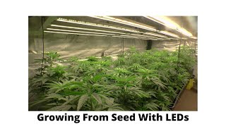 Starting Seeds With LEDs by John Berfelo