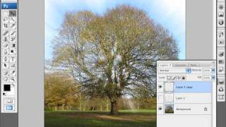 How to Add Rays of Light Through Trees
