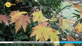 Sonbaharda Ve Kış Başlangıcında Toroslarda Doğada Renklerin Dansı Doğanın Kültürü 4K UHD