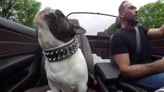 Der singende Hund