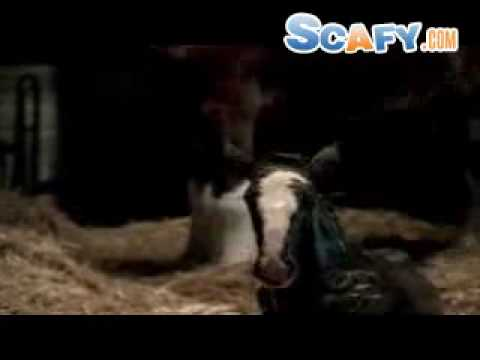 Funny commercials Budweiser? Clydesdales 2000 ??^?[?\?][ Scafy dot com