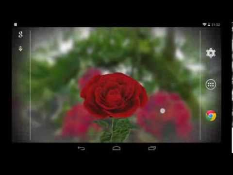 Video of 3D Rose Live Wallpaper Free