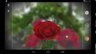 3D Rose Live Wallpaper Free YouTube video