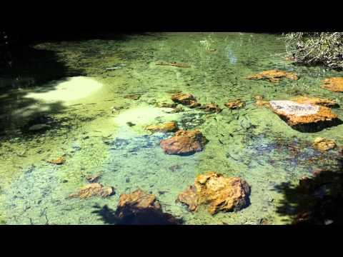 Nascentes no Córrego Fervedouro - Cocalinho-MT.