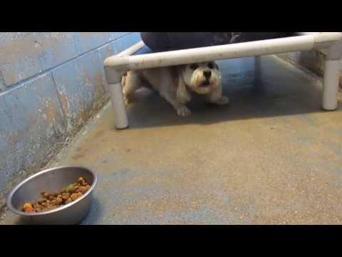 *URGENT! FULL!* DOGS for ADOPTION @ North Platte Animal Shelter ~6-24-2013