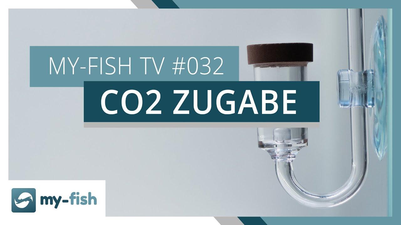 my-fish TV - Deine Nr. 1 Anlaufstelle für alle Themen rund um die Aquaristik 32