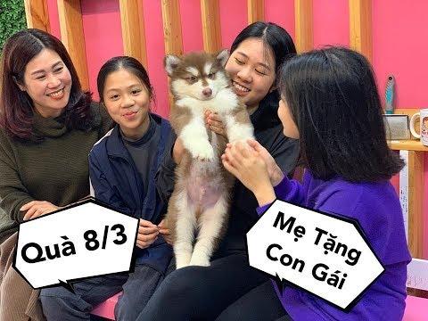 8/3 Mẹ Đi Hơn 100km Mua Chó Tăng Con Gái - Yêu Quá Mật Pet Family - Thời lượng: 7 phút, 48 giây.