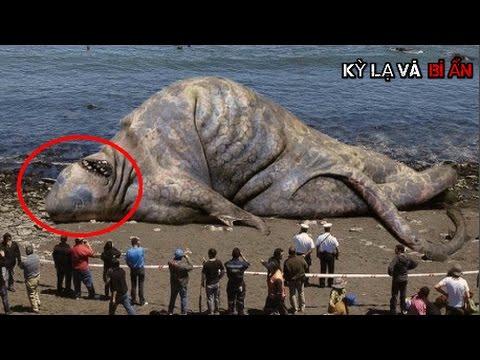 10 con thủy quái khủng nhất