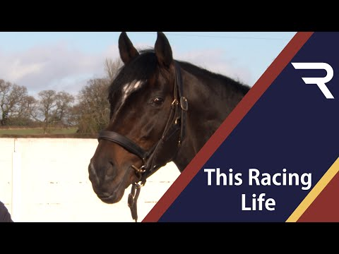 This Racing Life - Shade Oak Stud - Racing TV Nick Lightfoot presents the last episode in the season from Shade Oak Stud in Shropshire, while Christina McElhinney catches up with Ben Pauling and meets Tom Ellis and Gina Andrews.