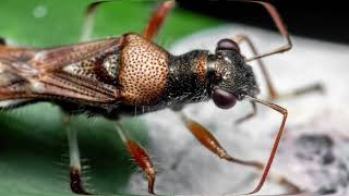 Most HATED Insects by Epic Wildlife