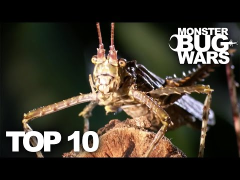 TOP 10 BUG FIGHTS | MONSTER BUG WARS
