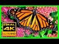 The Best Relaxing Garden in 4K - Butterflies, Birds and Flowers🌻🐦 2 hours - 4K UHD Screensaver