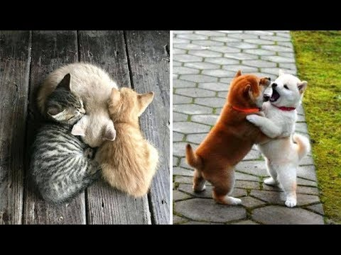Cute baby animals Videos Compilation cute moment of the animals - Soo Cute! 40