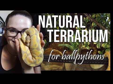 NATURAL LOOKING TERRARIUM (For ball pythons)_Terrárium, Vivárium. Heti legjobbak