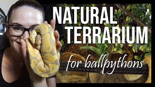 NATURAL LOOKING TERRARIUM (For ball pythons) by Jossers Jungle