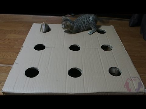 Bengal Kittens Playing Whack-a-Mole (Video)