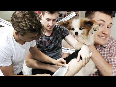 Waxing - I get my leg waxed by Joe, show you my dog and answer lots of crazy questions! ▻ Click Here To Subscribe: http://bit.ly/OliWhiteTV Follow Oli on Twitter: http://www.twitter.com/OliWhiteTV...