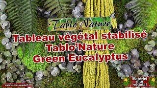 Tableau végétal stabilisé Tablo'Nature Green Eucalyptus