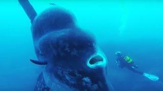Video 25 Terrifying Sea Creatures That Actually Exist MP3, 3GP, MP4, WEBM, AVI, FLV November 2018