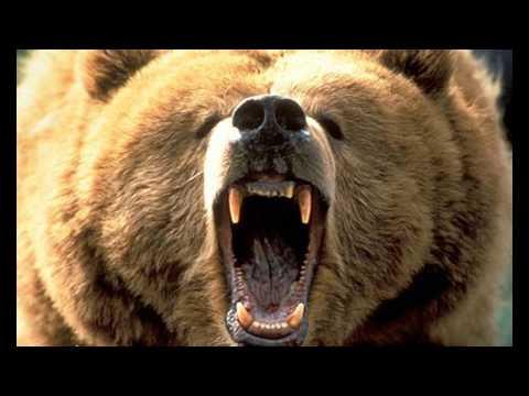 Ventrilo Invasion - Mounted Animal Nature Fail (видео)